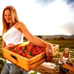Робота у садово-польових господарствах